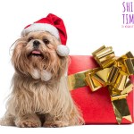 Perfect Shih Tzu Gifts For Christmas