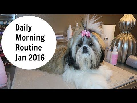Daily Dog Grooming Routine for Shih Tzu