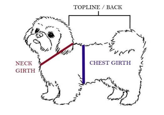 shih tzu clothes - shih tzu measurements