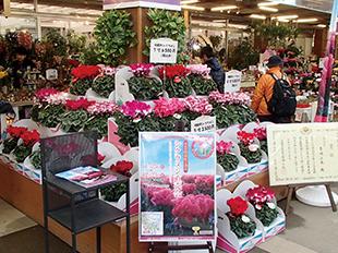 明和町花卉研究会のイベント