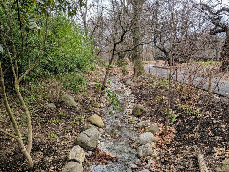 Stream Brooklyn Botanic Garden Winter