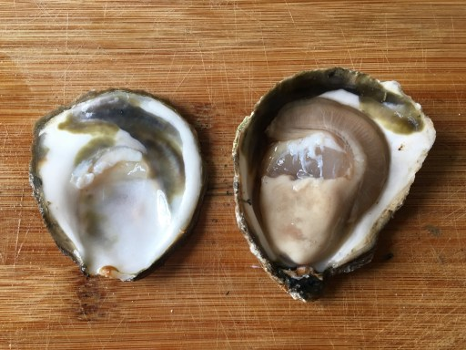 NYC's Wildlife Oysters