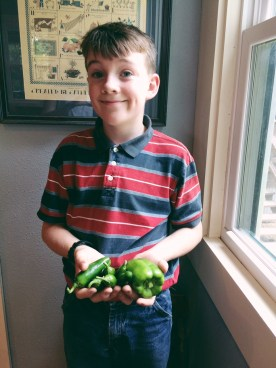 Delicious peppers from Nathanael's Garden!