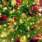 クリスマスツリーは知恵の樹!?飾りには一つ一つに凄い意味がある!