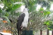 Bird at Davao Crocodile Park