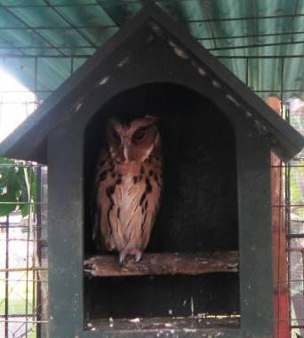Owl at Davao Crocodile Park