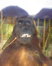 Preserved dead monkey at Davao Crocodile Park