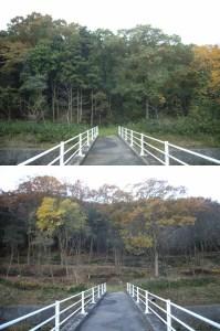 伐採前後の比較-07