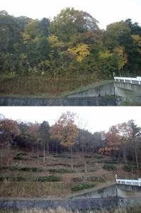 伐採前後の比較-08