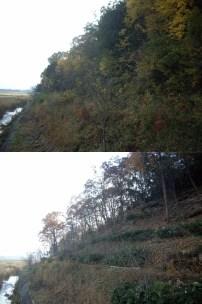 伐採前後の比較-09