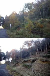 伐採前後の比較-10