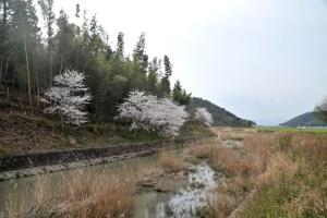 白鳥川-雪野山 西山橋付近