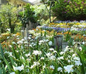 師岡町にある法華寺のさんげ坂花壇。「坂を登り、見下ろした時の景色は絶景です」とのこと(港北オープンガーデンTwitterより)
