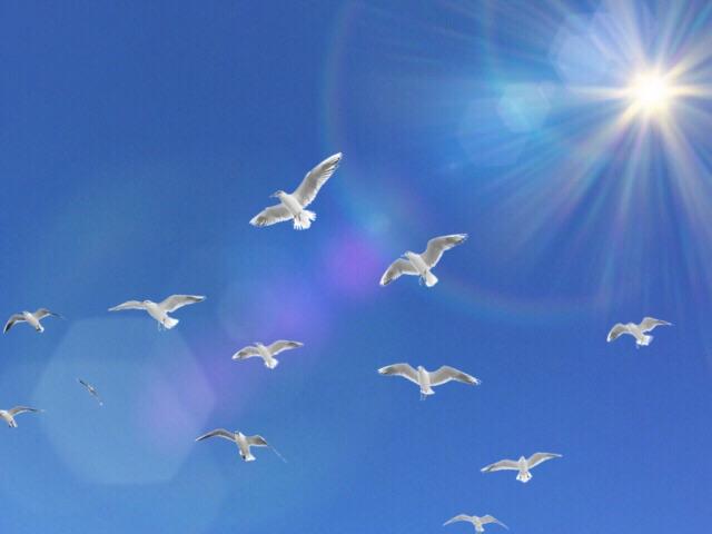 秋晴れの晴天を飛ぶ鳥