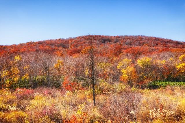 秋晴れと紅葉