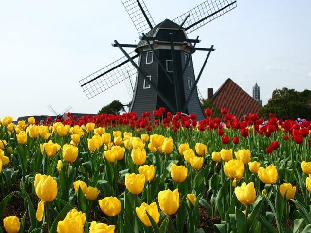 ハウステンボスの風車とチューリップ