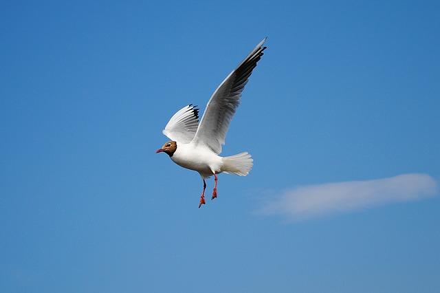 空を飛ぶ鳥