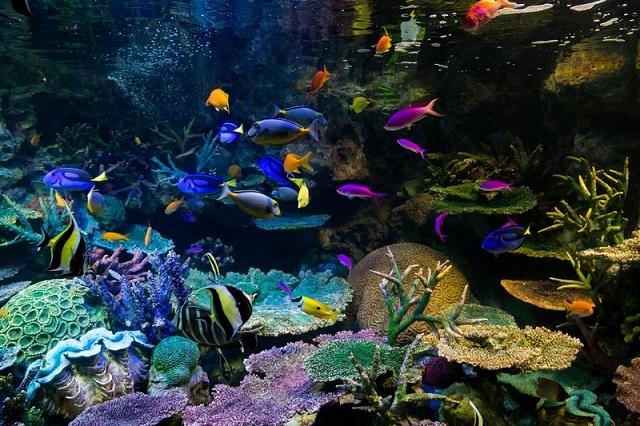 水族館の綺麗な魚