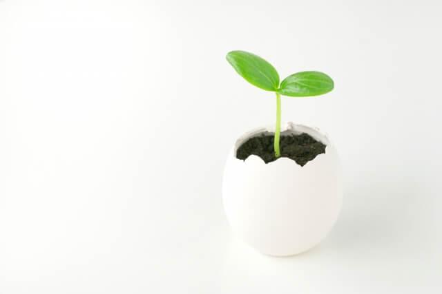 卵の殻の中に植物を植える