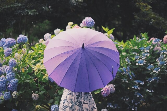 雨の日に傘をさしてあじさいを見る女性
