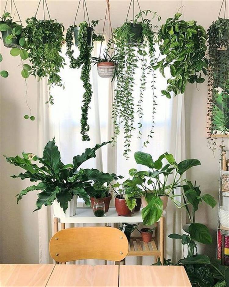 60 Impressive And Simple Indoor Hanging Plants Ideas For ... on Hanging Plant Ideas  id=27829
