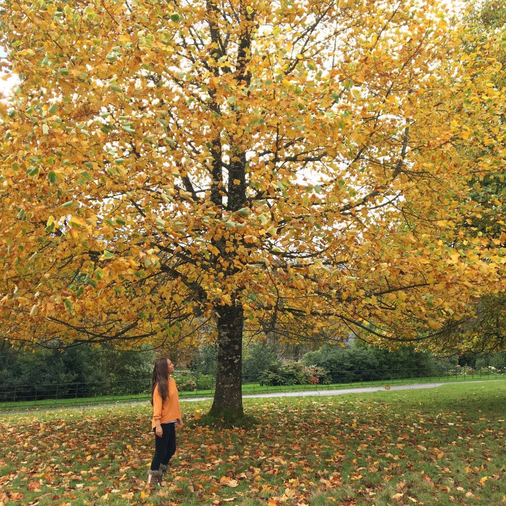 Autumn Yoga Music Playlist: Listen Now!