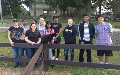 What's It Like Volunteering At Shining Hope Farms?
