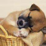 sleepingpuppy