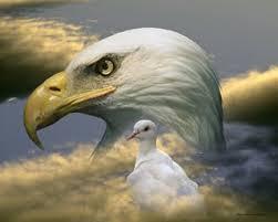 Eagle Dove