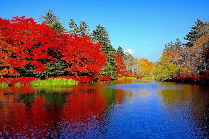 雲場池の見事な紅葉