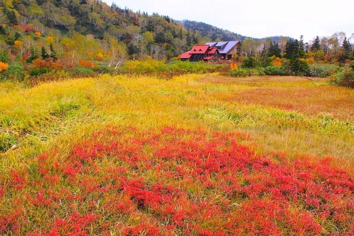 栂池自然園の草紅葉