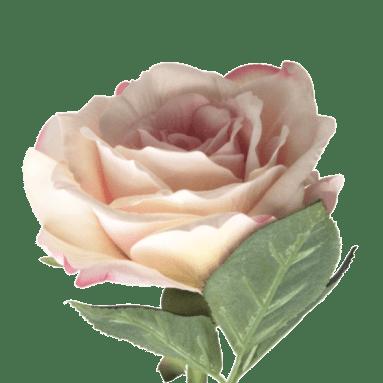 Abigail Ahern Rose Blush