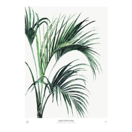 Urban_Botanics_SS17_Howea_large