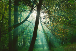 Mystical sun rays between trees in green forest