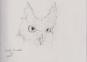 Screech Owl Sketch