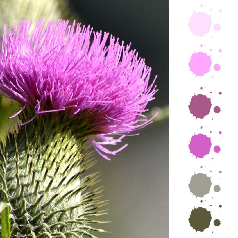 Take Inspiration with Ultra Violet Swatches