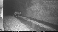 Doe at Night