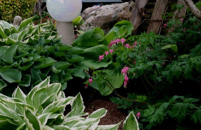 Heart Garden-Shiny Tiny Mansion