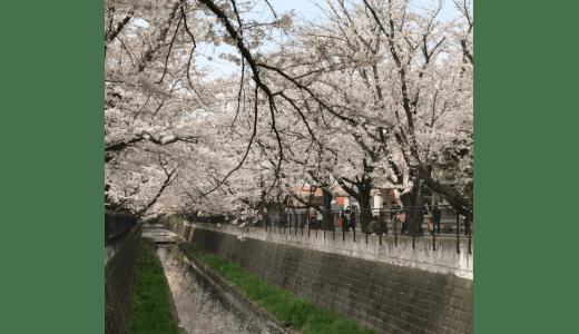 新百合ヶ丘駅から柿生駅をつなぐ麻生川沿いの散歩コースの桜並木が満開の様子