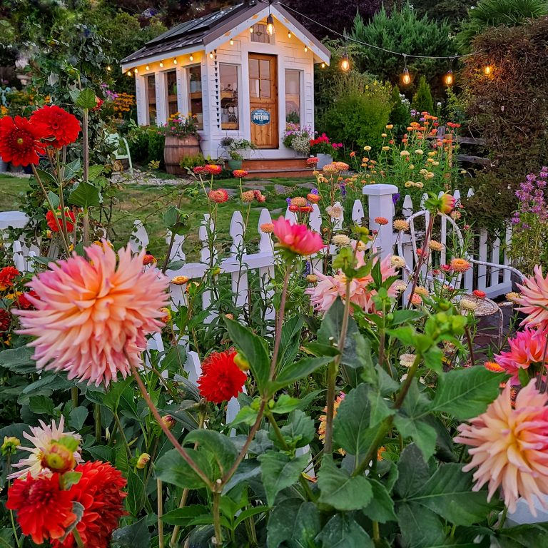 Top post: Summer greenhouse view with fresh cut flower garden.
