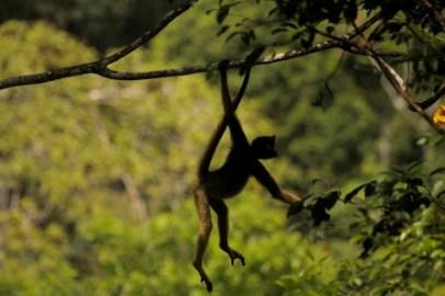 Amazon Mammal Week