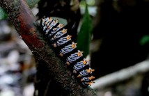 Striking colors prevent it to be eaten, the importance of coloration in the creatures of the forest.