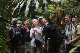 Small groups explore the diversity of life of Yasuni Biosphere Reserve.
