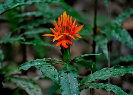 20% of the world's plant species are found in the rainforests. Common Plants Of The Amazon Rainforest Shiripuno Amazon Lodge