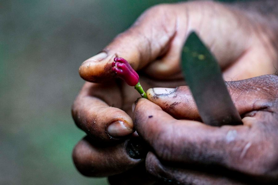 Tanzanie, Zanzibar, Pemba, démarche éthique et responsable, épices de terroir, single origin spices, méthode artisanale, développement durable, vanille biologique, piment biologique, poivre biologique, cannelle biologique, épices paris, épices en vrac, épices sourcées en direct des petits producteurs, épices biologiques, épices bio