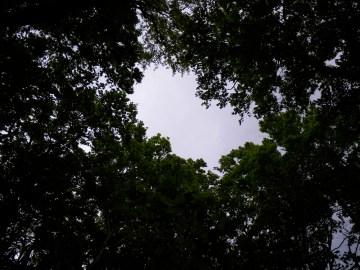 森の天井に大きな穴が。