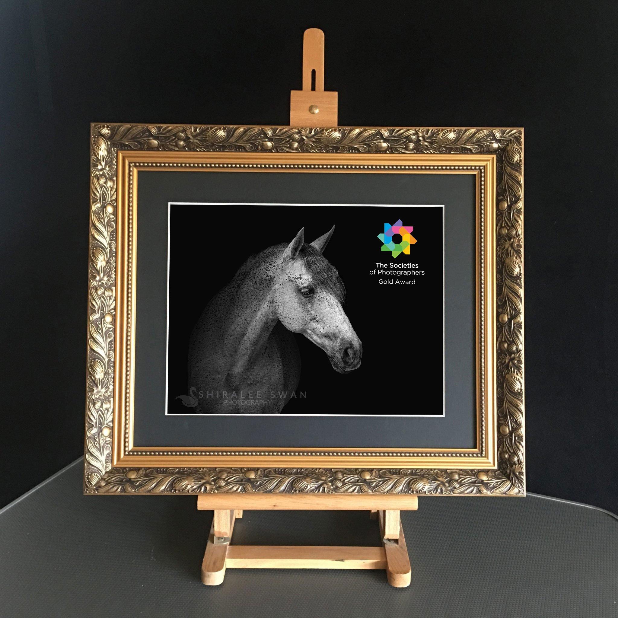 Gold Award Equine Portrait Photography
