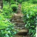 Meshana Makom, Meshana Mazel: The One Step That Can Change Your Life
