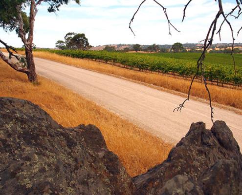 Wine Tasting Barossa Valley Wine Region
