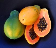 Sunrise Papaya[1]